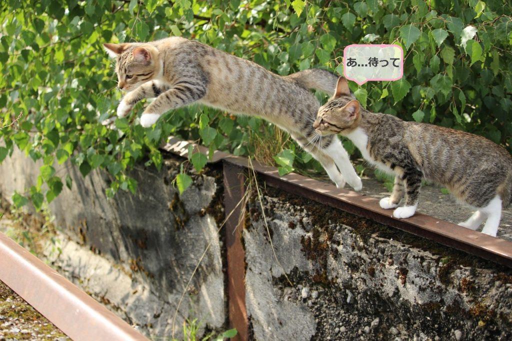 cat_fukidashi